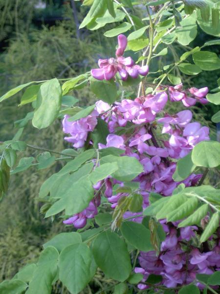 arboretum01_04_big.jpg