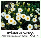 hvezdice_alpska_-_Aster_alpinus___Beauty_White__.jpg