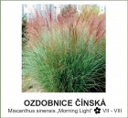 ozdobnice_cinska_-Miscanthus_sinensis___Morning_Light__.jpg